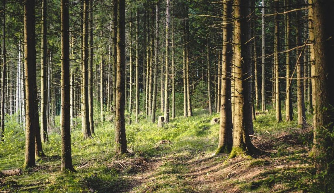 Top 5: Waldbaden in der Steiermark