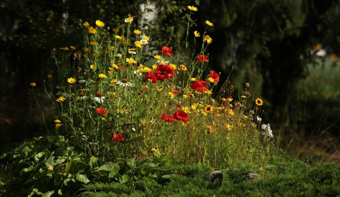 """""""Aktion Wildblumen"""" – Die Steiermark blüht auf!"""