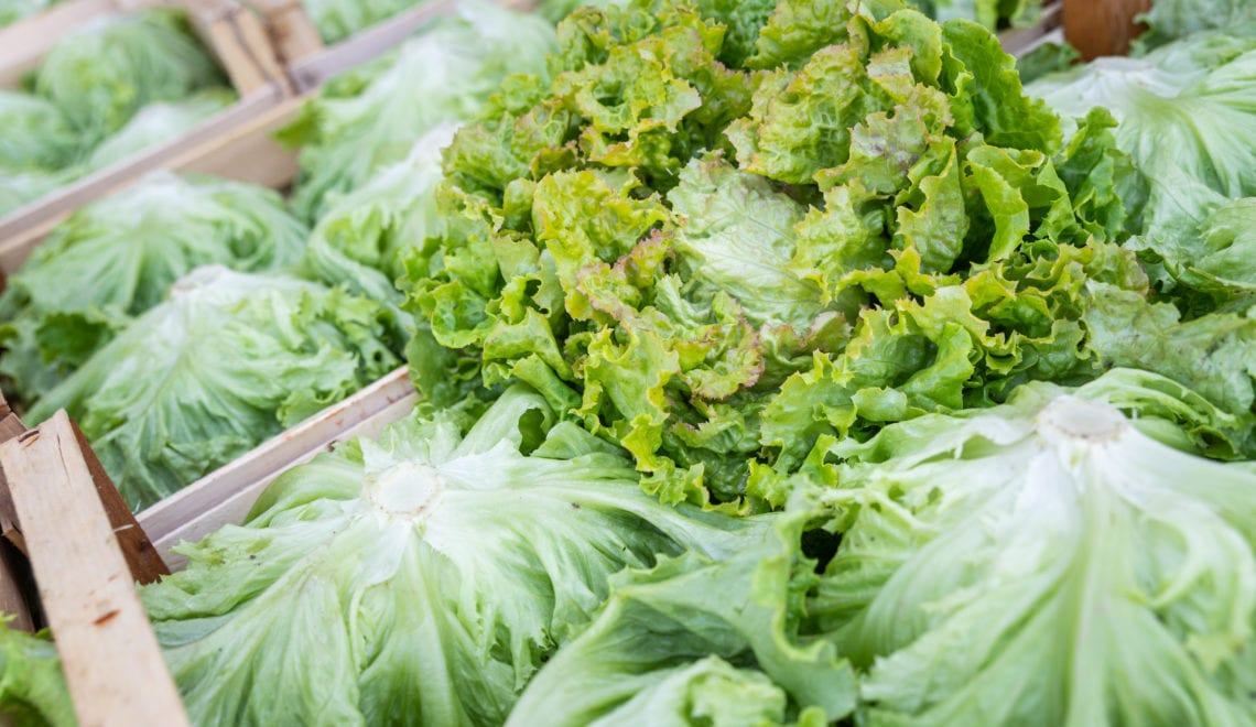 Salat und Wasserschutz